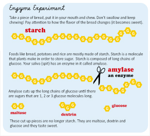 Enzyme infographic